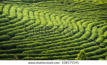 TEA GARDEN - stock photo