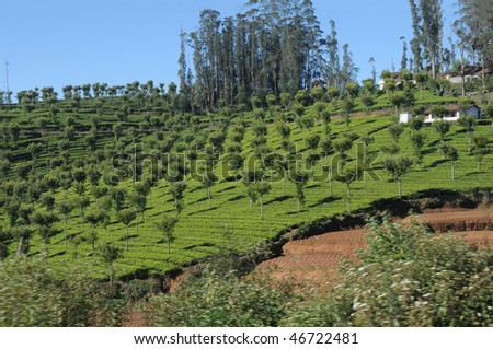 Tea Garden, View from Train Ooty - stock photo