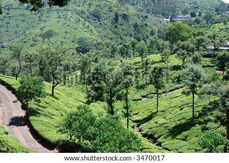 Tea gardens, Nilgiri hills, India - stock photo