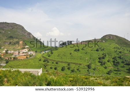 Tea Gardens, Ooty - stock photo