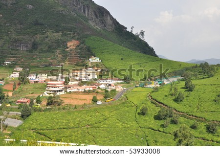 Tea Gardens, Resort, Ooty - stock photo