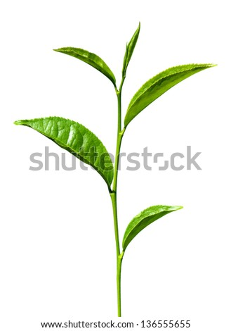 tea green leaves isolated on white - stock photo