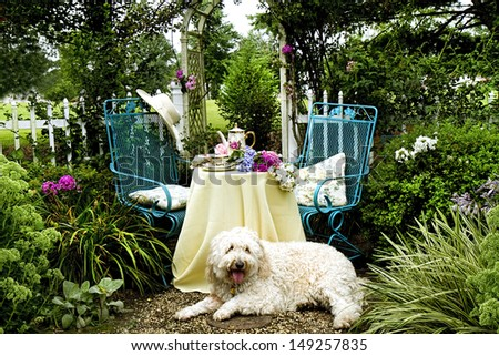 Tea in the garden for two - table setting with vintage dishes and tea set - dog laying down in the front on the ground - stock photo