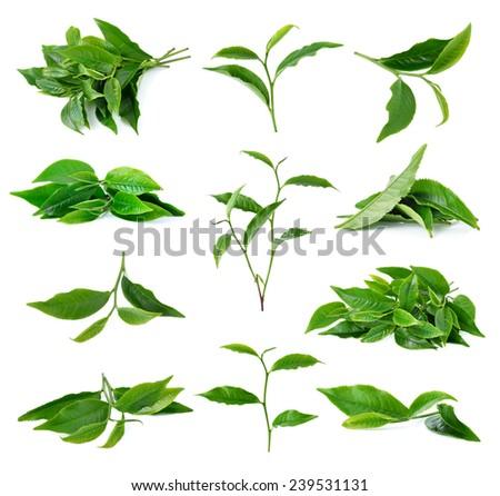 tea leaf isolated on white background - stock photo