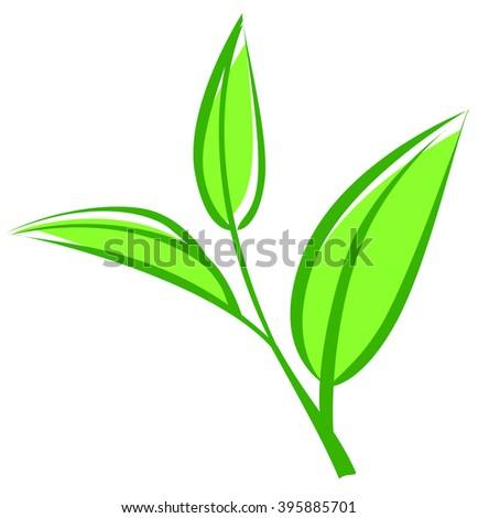 Tea leaves, young saplings - stock photo