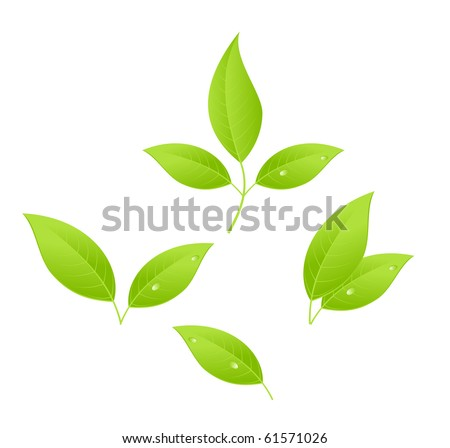 Tea leaves, young saplings. Vector illustration, isolated on a white. - stock photo