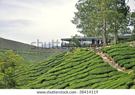 Tea plantation and rest house in Cameron Highlands, malaysia - stock photo