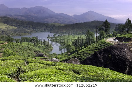 ... and the undulating landscape of Munnar, Kerala, India. - stock photo