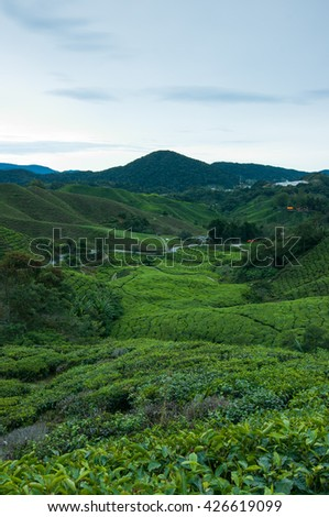 Tea plantation Cameron highlands during sunrise, Malaysia - stock photo