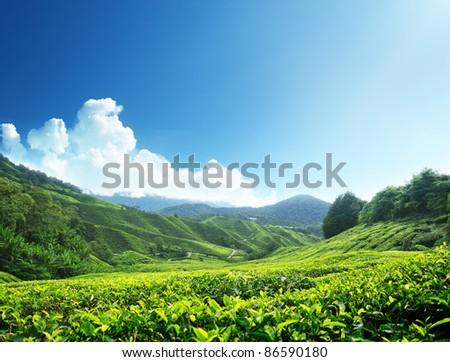 Tea plantation Cameron highlands, Malaysia - stock photo