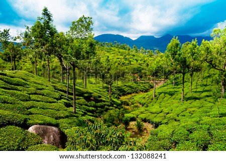 ... landscape under blue cloudy sky. Munnar, Kerala, India - stock photo
