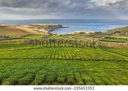 Tea plantation of factory Cha Porto Formoso. Azores, Portugal - stock photo