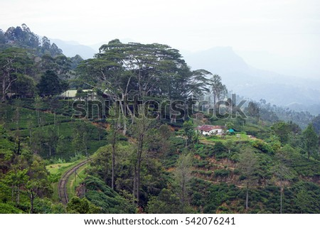 Tea plantation on railroad near Haputale, sri Lanka