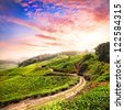 Tea plantation valley at dramatic pink sunset sky in Munnar, Kerala, India - stock photo