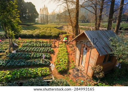 Tea Plantations and wooden storage in china - stock photo