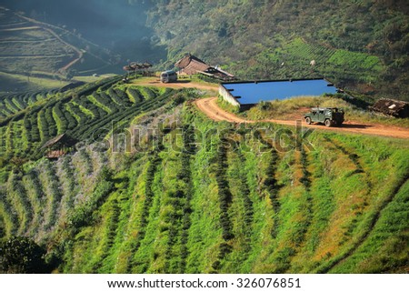 Tea Plantations at Doi Ang Khang , thailand