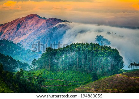 Tea plantations in India. Province Kerala - stock photo