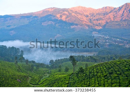Tea plantations in misty morning in Munnar, Kerala, South India. Munnar is situated at around 1,600 metres above sea level in the Western Ghats range of mountains. - stock photo