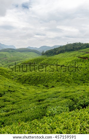 Tea plantations in Munnar, India. Beautiful landscape photographed on a cloudy day