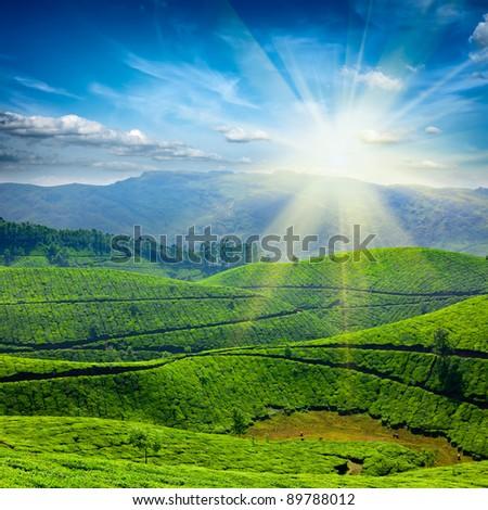 Tea plantations, sun. Kerala, India - stock photo