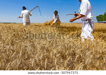 Team is reaping wheat manually with a scythe in the traditional rural way. - stock photo
