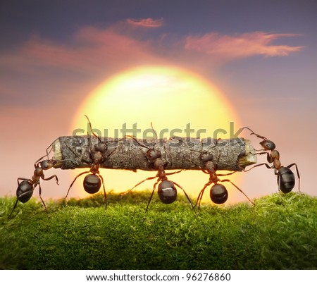 team of ants carry log on sunset or sunrise, teamwork concept - stock photo
