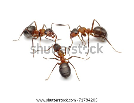 team of ants connecting with antennas to make network for finding solution or making work, common behaviour - stock photo