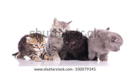 team of little multicolored kittens isolated on white
