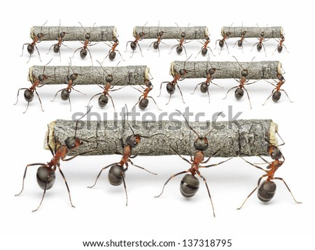 teams of ants work with logs,,  teamwork concept