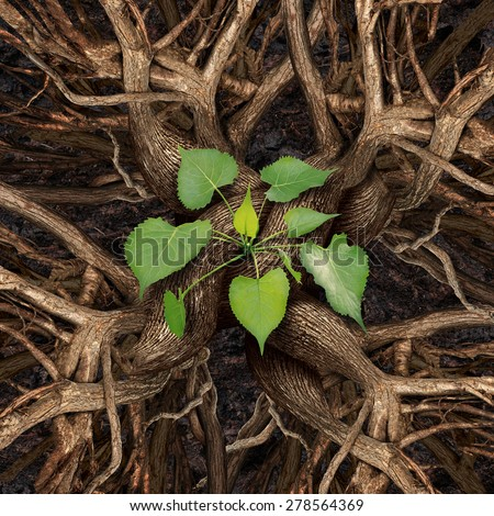 Teamwork success concept and coming together working as a team for prosperity growth as a group of trees meeting and connecting as one organization to produce a green leaf sapling. - stock photo