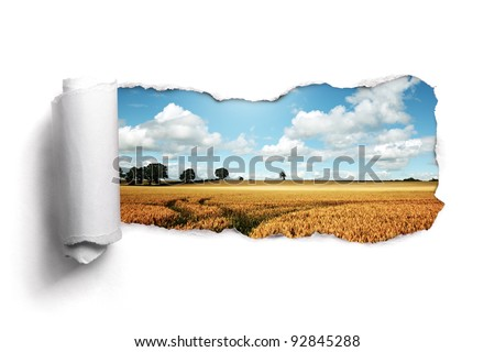 Tearing a paper frame hole to reveal wheat field landscape - stock photo