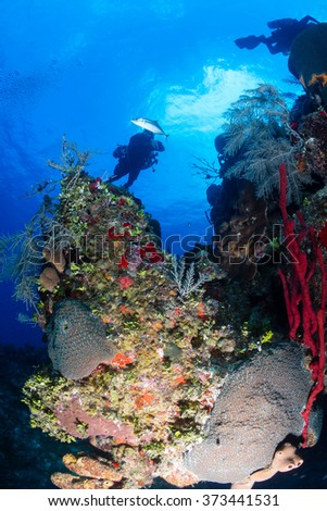 Technical SCUBA divers on sidemount configuration swim over a colorful coral wall on a tropical reef - stock photo
