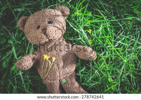 Teddy bear on the grass. Sun light - stock photo