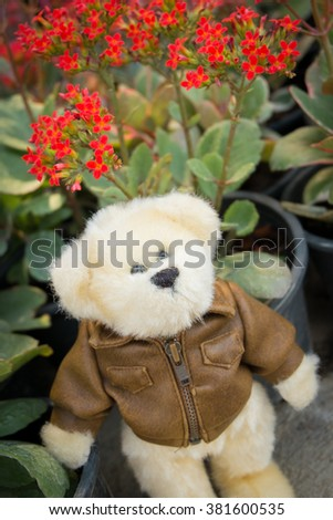 Teddy Bear Put the jacket in angry mood