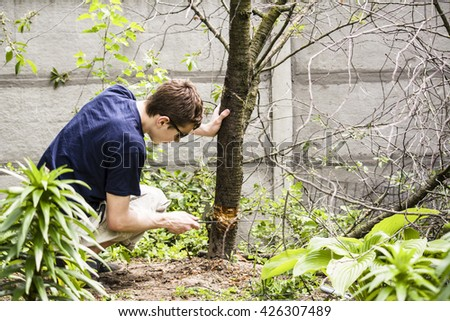 Teen cut down trees in the garden