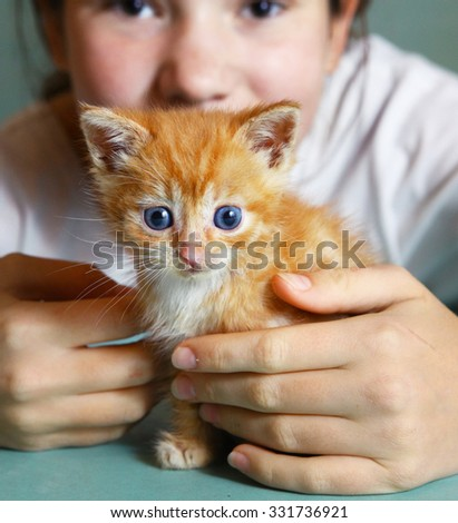 teen girl hands hold little one month old red fur blue eyes kitten - stock photo