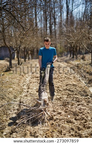 Teenager boy carrying an uprooted tree from the orchard, spring cleaning activity