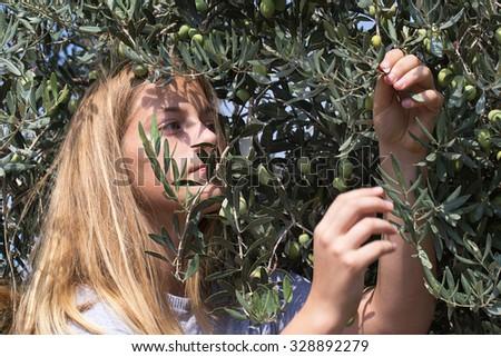 Teenager harvest green olives, portrait. Israel. Middle east.  - stock photo