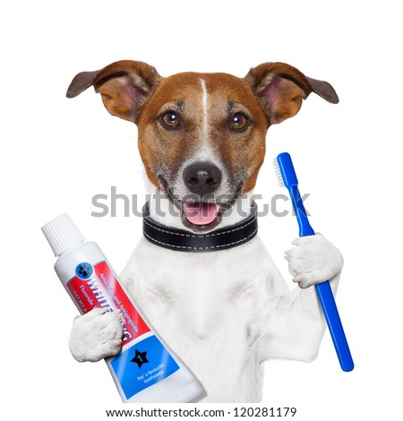 teeth cleaning dog with toothpaste and toothbrush - stock photo