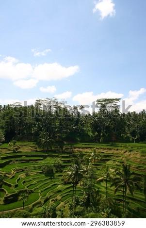 Tegallalang  Rice Terraces in Ubud, Bali, Indonesia - stock photo