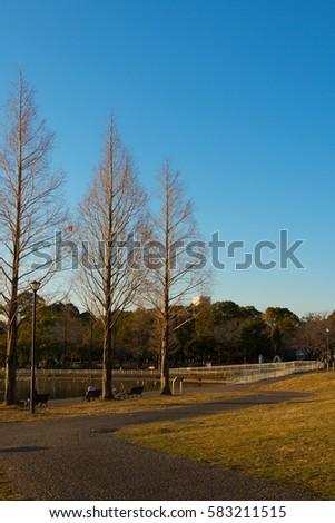 Teganuma Park Winter Teganuma Park Located Abiko Stock Photo
