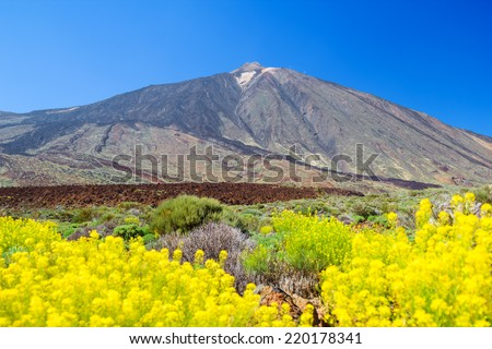 Teide volcano peak with yellow flowers in the foreground, Tenerife island, Spain. - stock photo
