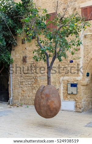 Tel Aviv, Israel - Nov 19, 2016: Famous tree without root with fruits in Jaffa, Israel