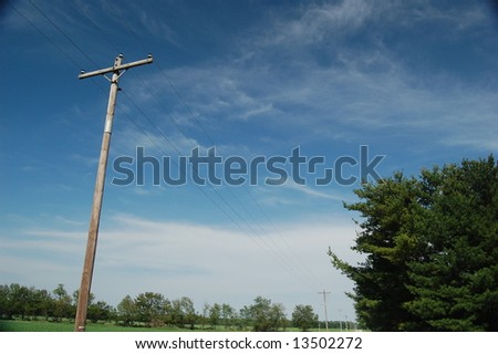 Telephone Lines & Trees - stock photo
