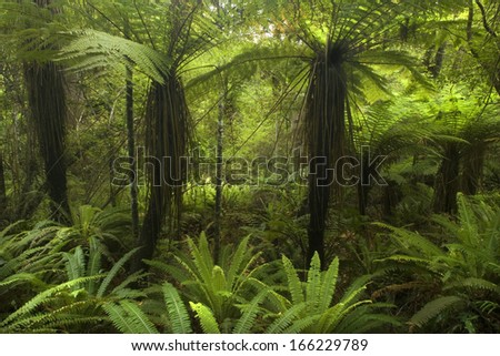Temperate rainforest, with many tree ferns building a dense undergrowth for other big, native trees. Catlins, Southland, New Zealand - stock photo