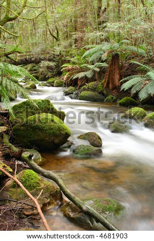 Temperate rainforest, with moss-covered boulders, ancient myrtle beecht trees, and softly flowing river.  Victoria, Australia. - stock photo