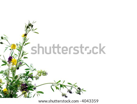 Template Pattern Multicolored Clover Flowers Stock Photo (Download ...
