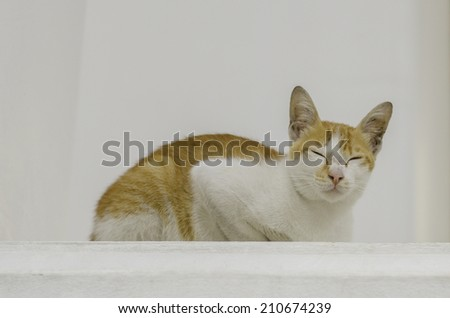 Temple cat with white wall as background - stock photo