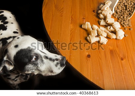 Temptation. Dog and his food.