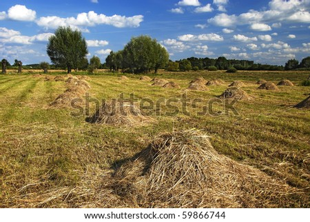 ten reams of straw on reaped field